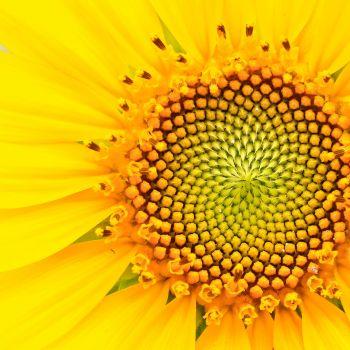 Naturopathie à Nantes et vitamine D